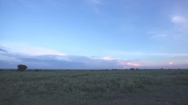 serengeti landscape at dusk - wiese stock videos & royalty-free footage