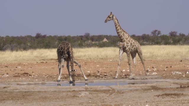 serengeti national park - wasserloch stock-videos und b-roll-filmmaterial