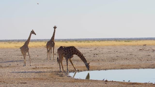 serengeti national park - växtätare bildbanksvideor och videomaterial från bakom kulisserna