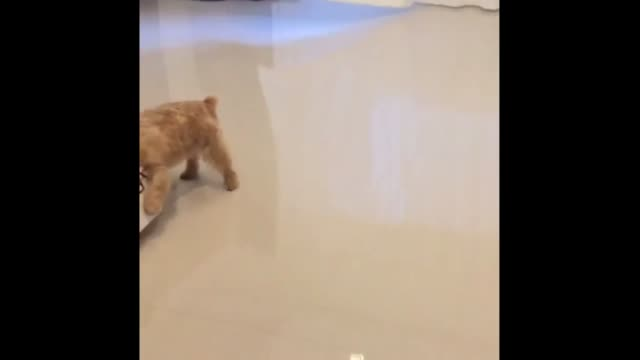 sergeant the puppy's life is filled with simple pleasures. there's his owners. there's treats. there's toys. and there's always a little more room... - sergeant stock videos & royalty-free footage