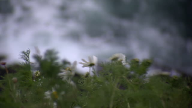 series of focus pulls between vegetation and rough seawater on county cork's coastline, ireland. - rough stock videos & royalty-free footage