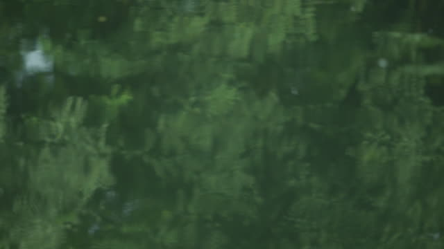Series of focus pulls over the surface of the calm River Cam, which reflects the verdant trees on its bank, UK.