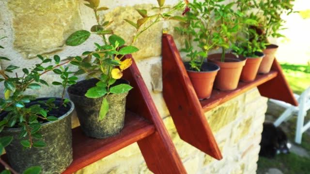素朴な場所でのポットのシリーズ - 観葉植物点の映像素材/bロール