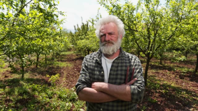 serious farmer in his orchard - produttore video stock e b–roll
