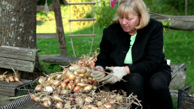 serious woman sorts onions in the backyard - drying stock videos & royalty-free footage