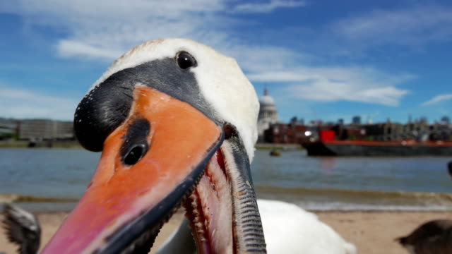 serrated swan bill close up - city of london stock videos & royalty-free footage