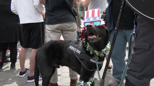 A service dog wears a Marijuana themed costume during the annual Cannabis Day Rally in Union Square Park New York