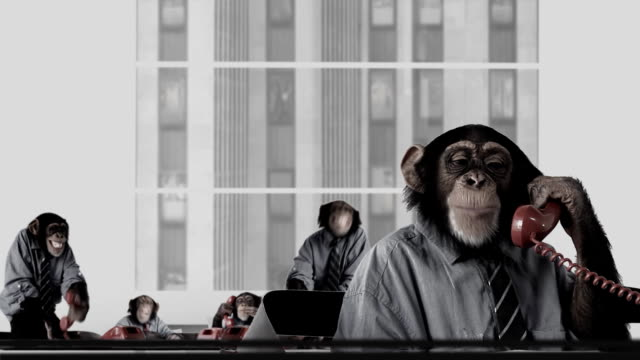 stockvideo's en b-roll-footage met service monkey team - humour