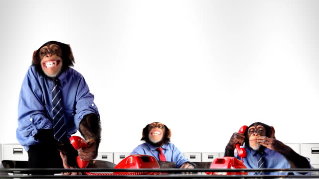 service team monkey - chimpanzee stock videos & royalty-free footage