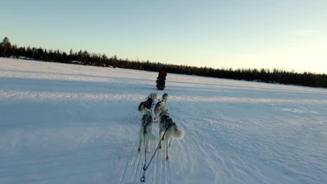 vídeos y material grabado en eventos de stock de setting out on a dog sled adventure - árbol de hoja caduca