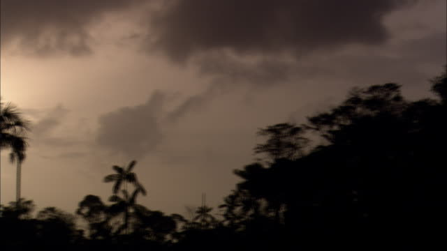 a setting sun silhouettes tropical vegetation in french guiana. - french guiana stock videos & royalty-free footage