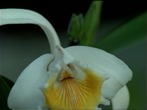 vídeos y material grabado en eventos de stock de several black ants crawl around the stalk of an orchid. - artrópodo