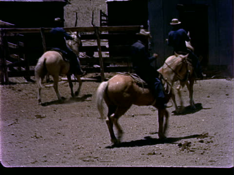 Several cowboys riding horses through dusty corral briefly trying to catch cow calf / cowboy riding horse through corral crowded with cattle cowboy...