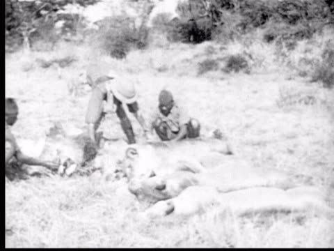 several dead lions lay on ground while white hunter + two black porters examine them - anno 1925 video stock e b–roll