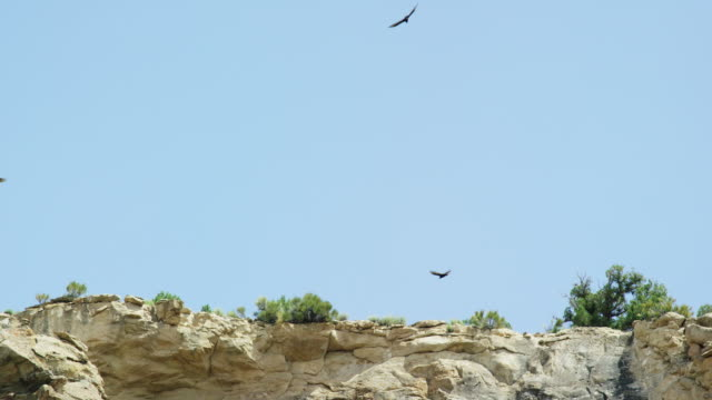 several hawks circle the side of a rocky cliff in a high desert under a clear, blue, sunny sky - general view stock videos & royalty-free footage
