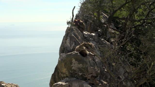 Several Monkeys on a Rocky Outcrop