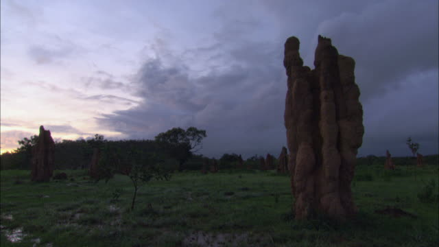 ws several tall termite mounds standing in a lush green field with dark skies overhead / mt. bundy, northern territory, australia - stationary process plate stock videos and b-roll footage