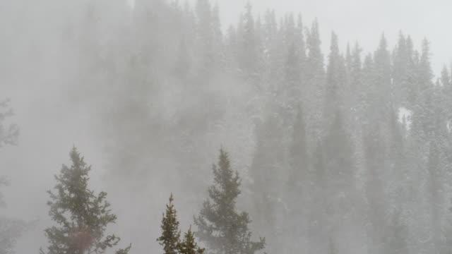stockvideo's en b-roll-footage met severe snow storm over mountain forest - sneeuwstorm