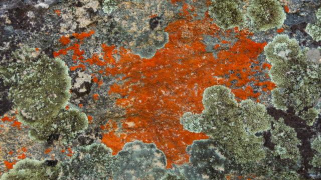 sevilla bushman rock art trail - 地衣類点の映像素材/bロール