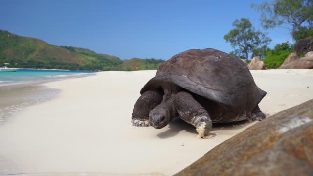 seychelles footage - landschildkröte stock-videos und b-roll-filmmaterial