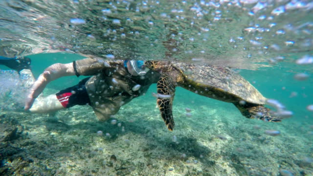 seychelles- hawksbill sea turtle (eretmochelys imbricata) with a diver 2 - snorkelling stock videos & royalty-free footage