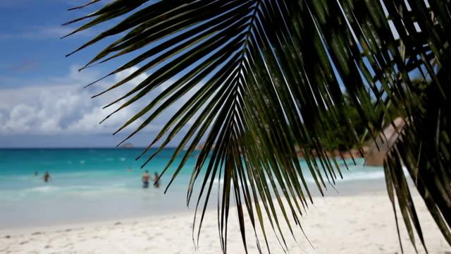 vidéos et rushes de seychelles, praslin island, anse volbert, sandy beach with palm tree - feuille de palmier