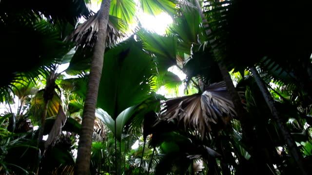 vídeos y material grabado en eventos de stock de seychelles, praslin island, vallée de mai park - seychelles