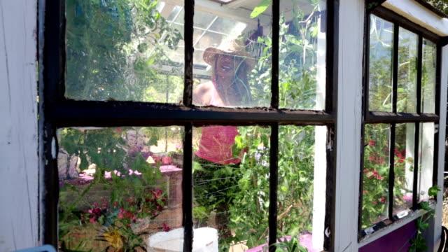 vídeos de stock, filmes e b-roll de jardinagem de estufa chique gasto. regar plantas dentro da estufa. - peitoril de janela
