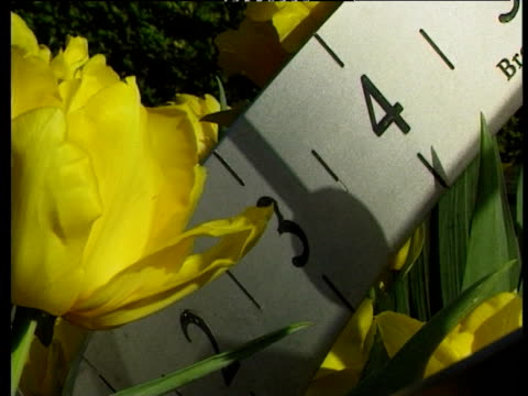 stockvideo's en b-roll-footage met shadow cast across numbers etched into metal sundial amongst tulips - zonnewijzer