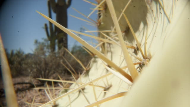 a shadow falls over the spines of a saguaro cactus. available in hd. - cactus video stock e b–roll