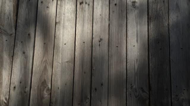 秋の庭、木の壁の4kシャドウ。 - 反射点の映像素材/bロール