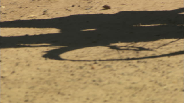 shadow of a person pushing a bicycle along a dirt road.  - pushing stock videos & royalty-free footage