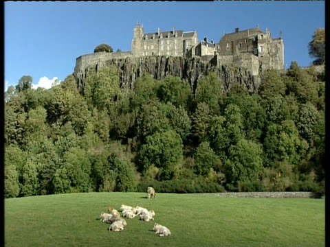 shadow of cloud passes over stirling castle with cows and trees in foreground - stirling stock videos and b-roll footage