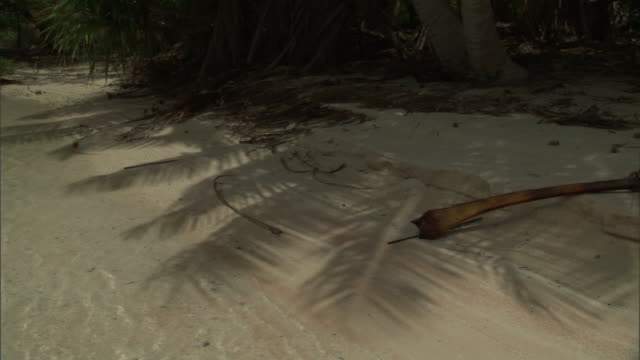 shadow of coconut palm (cocos nucifera) fronds on beach, fakarava atoll, french polynesia - island stock videos and b-roll footage