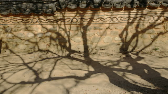 shadow of crepe-myrtle(lagerstroemia indica) on wall of songgwangsa temple / suncheon-si, jeollanam-do, south korea - architettura video stock e b–roll