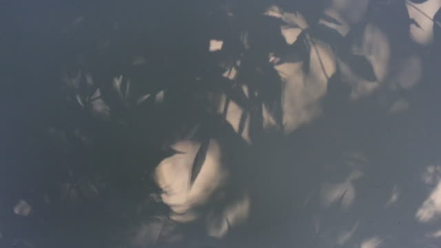 shadow of leaves on white metal surface - leaf stock videos & royalty-free footage