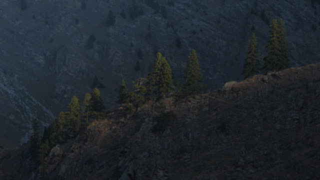 Shadow recedes revealing tres on mountain ridge.