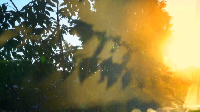 vídeos y material grabado en eventos de stock de sombras y cortinaondo en el viento. - arte decorativo