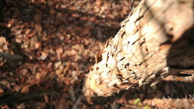 Shadows drift over tree trunk, Madagascar
