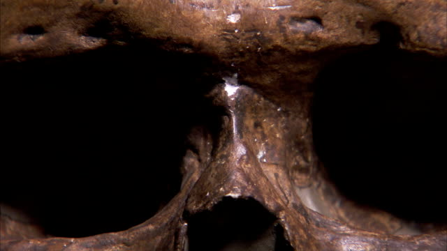 shadows move across the eye sockets of an ancient skull. available in hd. - skull stock videos and b-roll footage