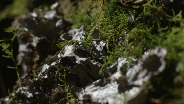 stockvideo's en b-roll-footage met shadows move over moss and fungi, new south wales, australia. - varenblad
