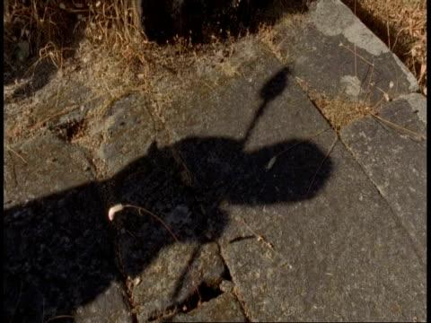 cu shadows of people walking across rocks, bandhavgarh national park, india - national icon stock videos & royalty-free footage