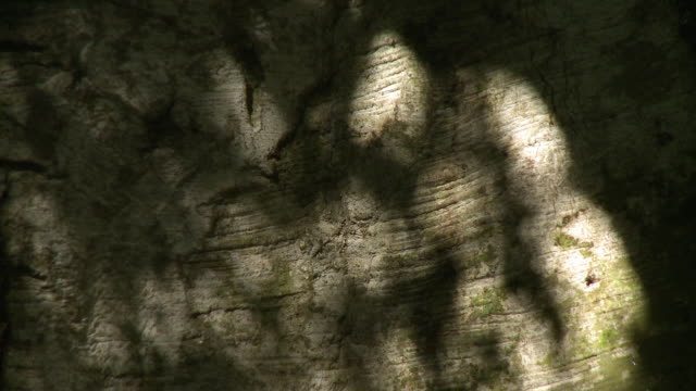 shadows of trees dancing on a rock wall - shade stock videos & royalty-free footage
