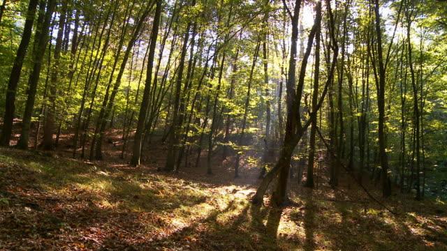 hd :time lapse (低速度撮影) 木の影 - 影のみ点の映像素材/bロール