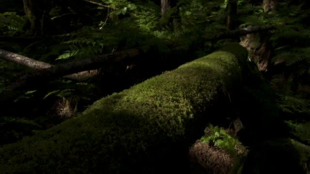Shadows pass over moss covered fallen tree trunks.