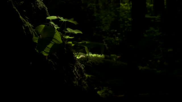 Shadows pass over plants and moss growing on tree trunks.