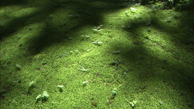stockvideo's en b-roll-footage met shadows waver on moss-covered ground. - schaduw in het middelpunt