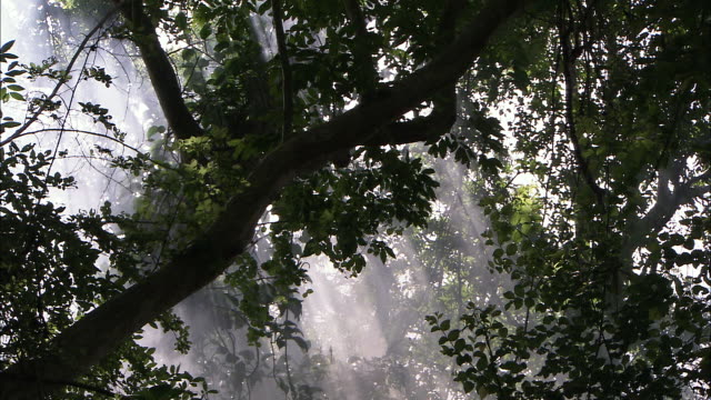 shafts of sunlight filter through trees in a cambodian jungle. - ramo parte della pianta video stock e b–roll
