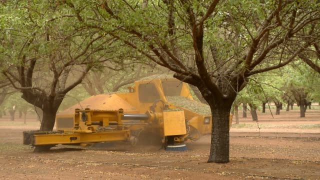 A shaker moves from almond tree to almond tree shaking the base of the trunk to dislodge the ripe almonds at Select Harvests almond orchard near...