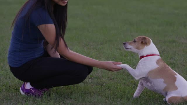 vidéos et rushes de agitant une patte - terrier jack russell